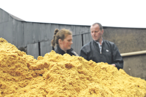Wet distillers' feeds for Eastern dairy producers gains popularity