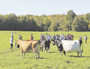 NODPA: Growing organic dairy in the Northeast