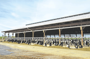 Expanding for heifer housing