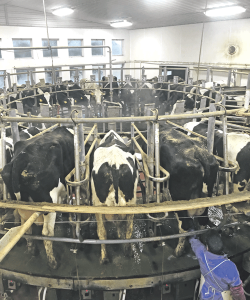 Innovation with cow comfort in mind