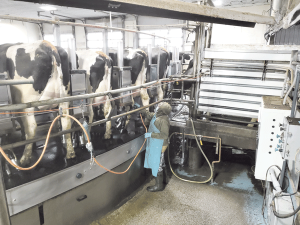 Lamb Farms' calves thrive with a good start