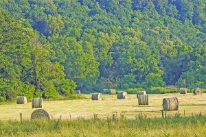 Managing hay and forages in winter