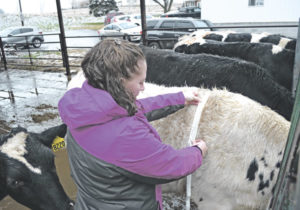 Tracking heifer growth for optimum mammary development