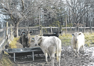 Improving winter livestock management