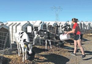 Enhanced hiring for dairy farms