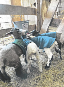 Weaning and culling decisions