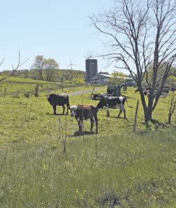 Aiming for dairy farm energy efficiency