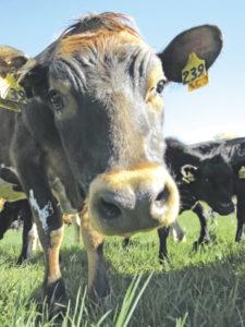 Northeast senators bundle with farmers' livelihoods