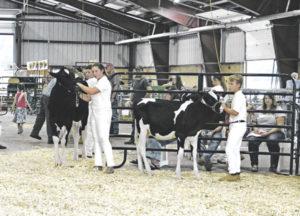 Fair showcases farm's herd