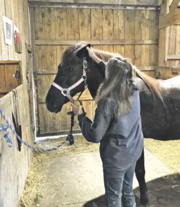Horse Tales: Lyme Disease!
