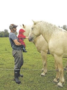Roy Nilson and American Cream draft horses