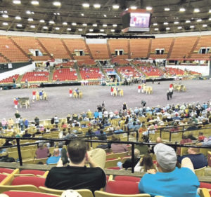 Inside World Dairy Expo: An experience for those who walk on two or four legs