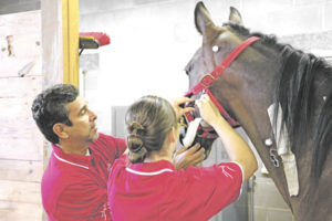 Horse Tales: Research on horses at Rutgers